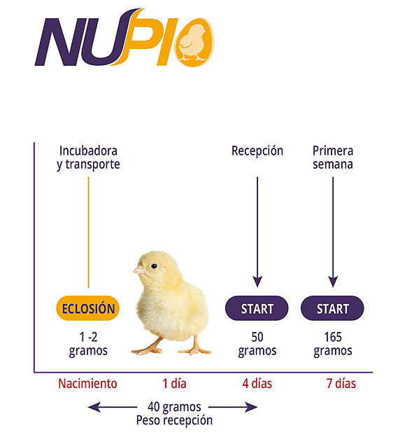 aves alimento Nupio