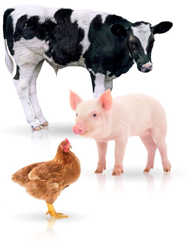 Protalim Nutrición Animal